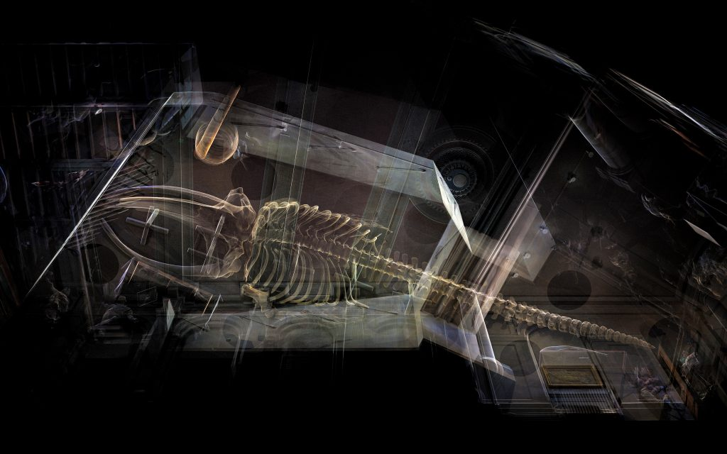 3D laser scanning of the 40ft North Atlantic Right Whale skeleton