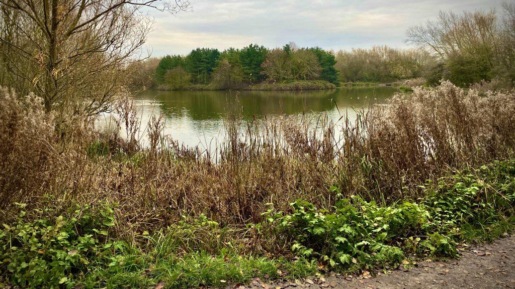 Noddle Hill nature reserve, Bransholme