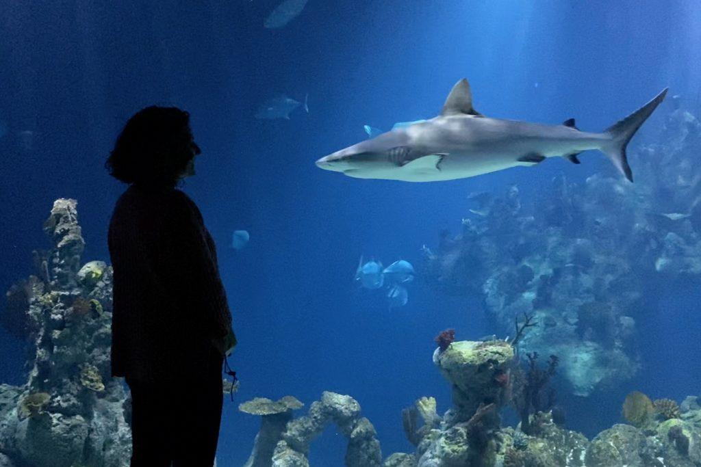 Katy Duke, CEO of The Deep